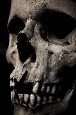 A closeup of the front of a human skull.