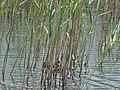 Small Prespa Lake 2019-06-01 39.jpg