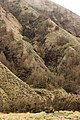 Small humans towards Mt. Bromo.jpg