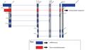 Smpd3 Gene (NSMase2) Alternative Splicing (2)-01.png
