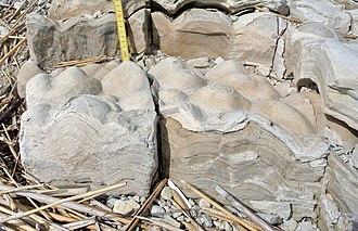 Stromatolite - Stromatolites in the Soeginina Beds (Paadla Formation, Ludlow, Silurian) near Kübassaare, Saaremaa, Estonia