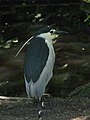 Something in the Kingfisher family apparently (540159581).jpg