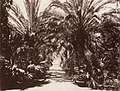 Sommer, Giorgio - Palermo, botanischer Garten (Zeno Fotografie).jpg