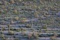 Sonoran Desert NM (9406679856).jpg