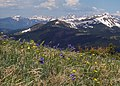 Spaulding Ridge wildflowers, Copper Mtn.jpg