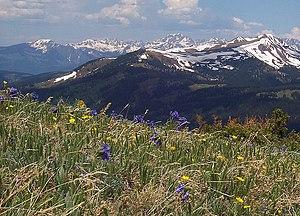 Copper Mountain (Colorado) - Spaulding Ridge wildflowers, summer 2008.