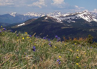 Copper Mountain (Colorado) - Spaulding Ridge wildflowers, summer 2008.
