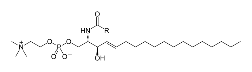 Sphingomyelin-horizontal-2D-skeletal