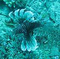 Spikyfish.JPG