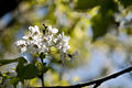 Spring (5606254275).jpg