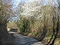 Spring blossom near the railway bridge - geograph.org.uk - 361349.jpg