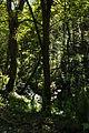 St Nectan's Glen (5529).jpg