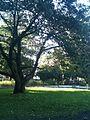 Stadtpark - panoramio (5).jpg
