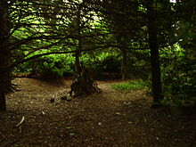 Image of trees within a wooded area.
