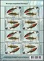 Stamp of Belarus - 2019 - Colnect 875676 - Three Spined Stickleback Gasterosteus aculeatus.jpeg