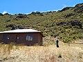 Starr-140630-0896-Plantago lanceolata-habit with Kim view cabin south rim-Kapalaoa HNP-Maui (25125600112).jpg