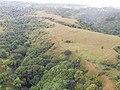 Starr-141014-2245-Caesalpinia decapetala-aerial view edge of gulch pasture-Kakipi Gulch Haiku-Maui (24620507373).jpg
