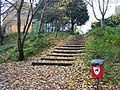 Steps to Medlar Grove in Whitegate Wood - geograph.org.uk - 1043739.jpg
