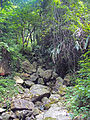 Stream flowing down Victoria Peak, Hong Kong.jpg