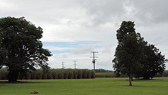 Bellenden Ker, Queensland - Sugar cane farming, Bellenden Ker, 2018