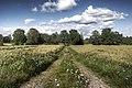 Summer in Småland - Flickr - A.Cahlenstein Photography.jpg