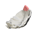 Superior angle of the occipital bone02.png