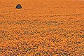 Suráfrica, Namaqualand 09.jpg