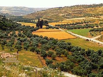 Surif - Pastoral scene near Surif village