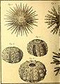 Tableau encyclopédique et méthodique des trois règnes de la nature (1791) (14788064703).jpg
