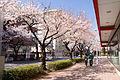 Tama-Plaza Station 07.jpg