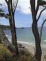 Tasmania wilderness through trees.jpg