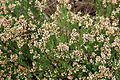 Tatton Park 2015 23 - Heather Erica Abla Minor.jpg