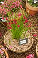 Tatton Park Flower Show 2014 016.jpg