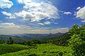 Tea plantation India November 2013.jpg