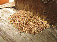 A dense pile of termite faecal pellets, about 10 centimeters by 20 centimeters by several centimeters in height, which have accumulated on a wooden shelf from termite activity somewhere above the frame of this photograph.