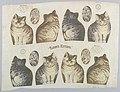 Textile, Tabby's Kittens, 1892 (CH 18452177).jpg