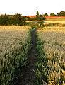 The Footpath to Burstwick - geograph.org.uk - 1414494.jpg