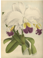 The Orchid Album-01-0014-0003.png