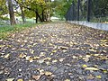 The TNU Botanical Garden in Simferopol, Crimea, Ukraine 33.JPG