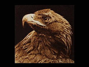 Pyrography - The Tawny Eagle. Davide Della Noce pyrography.