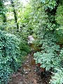 The Wriggles Brook - geograph.org.uk - 1455997.jpg
