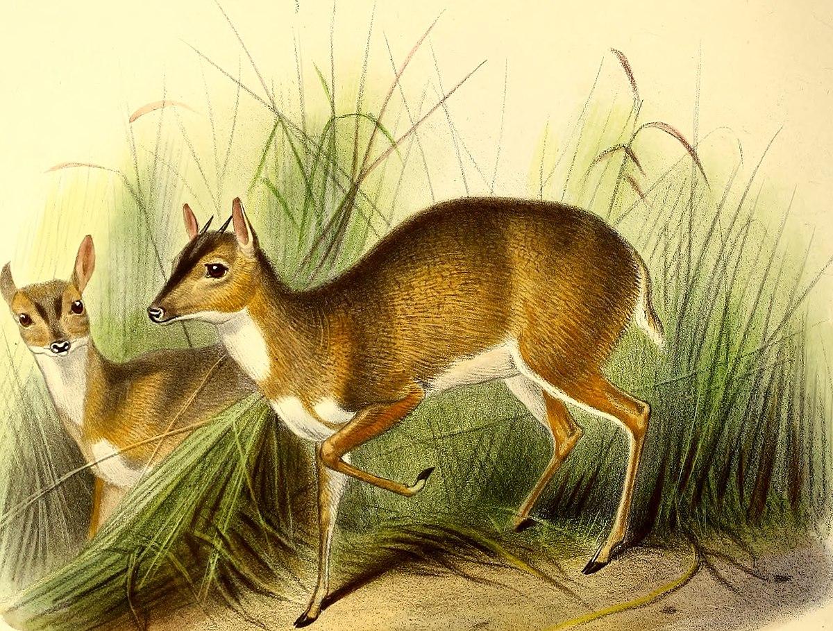 download csiro list of australian vertebrates: