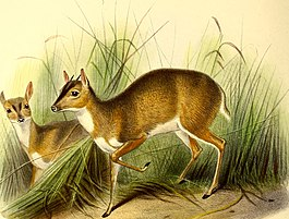 The book of antelopes (1894) (14792763543).jpg
