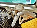 The vertebra of a whale in boat - panoramio.jpg