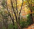 Thousand Step Trail (3) (30674772075).jpg