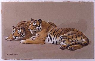 Tiger Studies