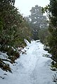 Top of Governors Bush Track in snow.jpg