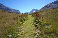 Trail to Ruisseau de la Sassière.jpg