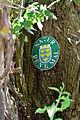 Traisen - Naturdenkmal LF-047 - zwei Zitterpappeln (Populus tremula) - 3.jpg