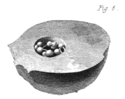 Transactions of the Geological Society, 1st series, vol. 2 plate page 0613 fig. 8.png